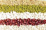 콩의 당뇨 예방 효과