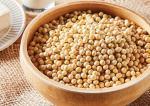 콩 성분의 장 건강 효과