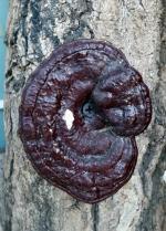 산림청, 임산물 불법채취 특별단속