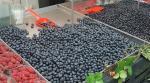 중국산 향신료ㆍ유럽산 베리류, 수입자가 안전성 입증해야
